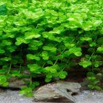 Cách tăng giảm độ pH trong hồ cá thủy sinh 1 cách an toàn và hiệu quả