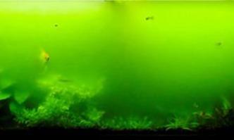 (Góc người mới) Rêu hại thủy sinh và cách phòng chống từ A đến Z