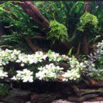 (Góc người mới) Kinh Nghiệm Trồng Rêu Trong Hồ Thủy Sinh