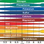 Độ pH Lý Tưởng Cho 1 Hồ Thủy Sinh